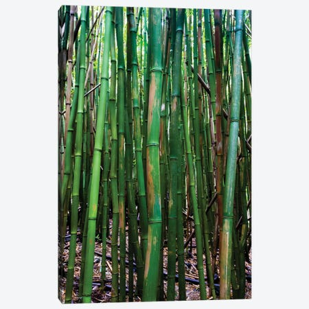 Bamboo Trees, Maui, Hawaii, USA III Canvas Print #PIM14280} by Panoramic Images Canvas Print