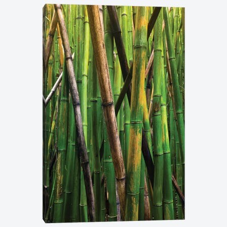 Bamboo Trees, Maui, Hawaii, USA IV Canvas Print #PIM14281} by Panoramic Images Canvas Print