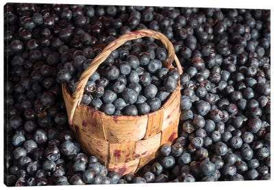 Blueberries At Market For Sale, Helsinki, Finland Canvas Art Print
