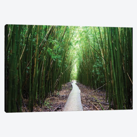 Boardwalk Through Bamboo, Pipiwai Trail, Hakeakala National Park, Kipahulu, Hana Road, Maui, Hawaii, USA I Canvas Print #PIM14292} by Panoramic Images Canvas Wall Art
