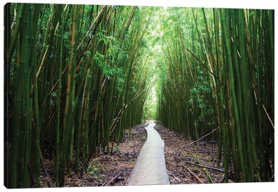 Boardwalk Through Bamboo, Pipiwai Trail, Hakeakala National Park, Kipahulu, Hana Road, Maui, Hawaii, USA I Canvas Art Print