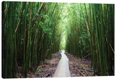 Boardwalk Through Bamboo, Pipiwai Trail, Hakeakala National Park, Kipahulu, Hana Road, Maui, Hawaii, USA I Canvas Art Print