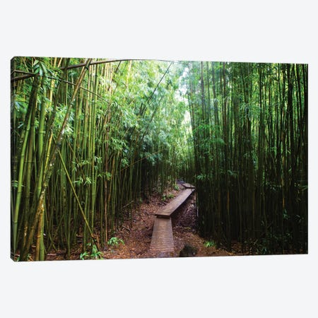 Boardwalk Through Bamboo, Pipiwai Trail, Hakeakala National Park, Kipahulu, Hana Road, Maui, Hawaii, USA II Canvas Print #PIM14293} by Panoramic Images Canvas Artwork