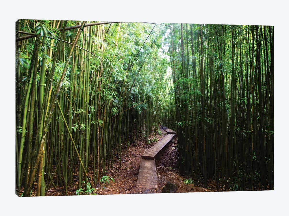 Boardwalk Through Bamboo, Pipiwai Trail, Hakeakala National Park, Kipahulu, Hana Road, Maui, Hawaii, USA II by Panoramic Images 1-piece Art Print