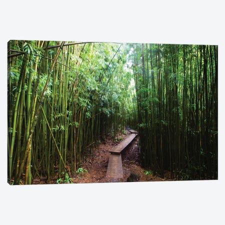 Boardwalk Through Bamboo, Pipiwai Trail, Hakeakala National Park, Kipahulu, Hana Road, Maui, Hawaii, USA II Canvas Print #PIM14293} by Panoramic Images Canvas Artwork