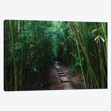 Boardwalk Through Bamboo, Pipiwai Trail, Hakeakala National Park, Kipahulu, Hana Road, Maui, Hawaii, USA III Canvas Print #PIM14294} by Panoramic Images Canvas Art Print
