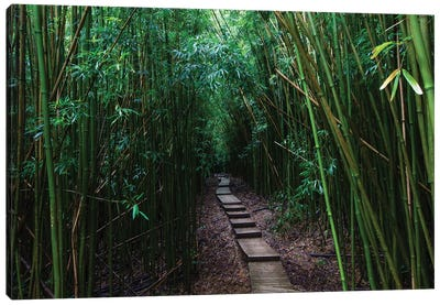 Boardwalk Through Bamboo, Pipiwai Trail, Hakeakala National Park, Kipahulu, Hana Road, Maui, Hawaii, USA III Canvas Art Print