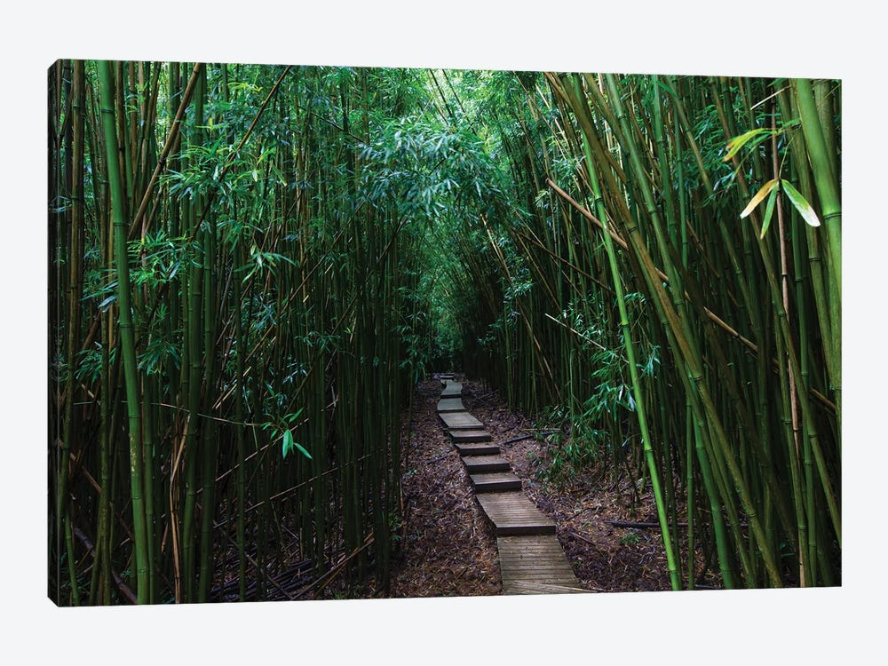 Boardwalk Through Bamboo, Pipiwai Trail, Hakeakala National Park, Kipahulu, Hana Road, Maui, Hawaii, USA III by Panoramic Images 1-piece Canvas Artwork