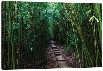 Boardwalk Through Bamboo, Pipiwai Trail, Hakeakala National Park, Kipahulu, Hana Road, Maui, Hawaii, USA III Canvas Art Print