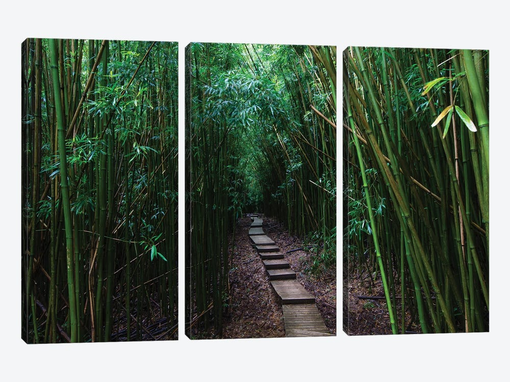 Boardwalk Through Bamboo, Pipiwai Trail, Hakeakala National Park, Kipahulu, Hana Road, Maui, Hawaii, USA III by Panoramic Images 3-piece Canvas Artwork
