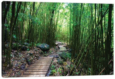 Boardwalk Through Bamboo, Pipiwai Trail, Hakeakala National Park, Kipahulu, Hana Road, Maui, Hawaii, USA IV Canvas Art Print
