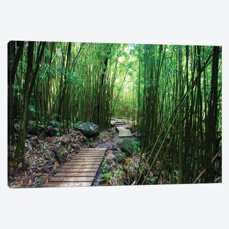 Boardwalk Through Bamboo, Pipiwai Trail, Hakeakala National Park, Kipahulu, Hana Road, Maui, Hawaii, USA IV Canvas Print #PIM14295} by Panoramic Images Canvas Art Print
