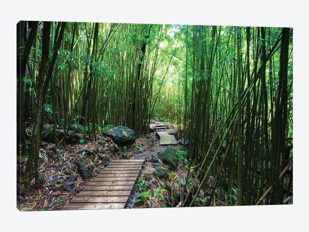 Boardwalk Through Bamboo, Pipiwai Trail, Hakeakala National Park, Kipahulu, Hana Road, Maui, Hawaii, USA IV by Panoramic Images 1-piece Art Print
