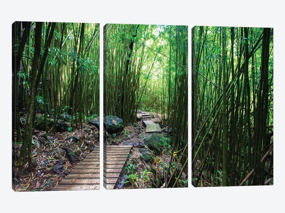 Boardwalk Through Bamboo, Pipiwai Trail, Hakeakala National Park, Kipahulu, Hana Road, Maui, Hawaii, USA IV by Panoramic Images 3-piece Canvas Print