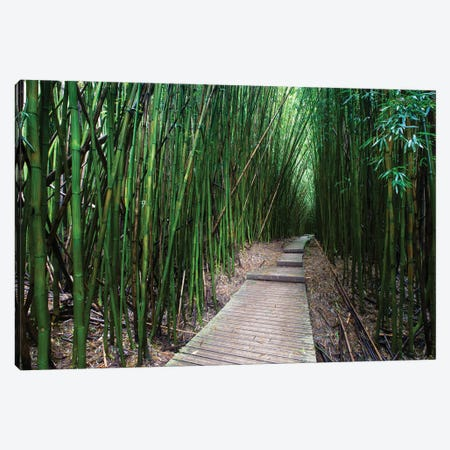 Boardwalk Through Bamboo, Pipiwai Trail, Hakeakala National Park, Kipahulu, Hana Road, Maui, Hawaii, USA V Canvas Print #PIM14296} by Panoramic Images Canvas Print