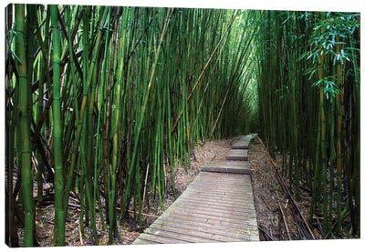 Boardwalk Through Bamboo, Pipiwai Trail, Hakeakala National Park, Kipahulu, Hana Road, Maui, Hawaii, USA V Canvas Art Print