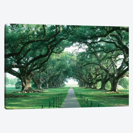 Brick Path Through Alley Of Oak Trees, Louisiana, New Orleans, USA Canvas Print #PIM14307} by Panoramic Images Canvas Art Print