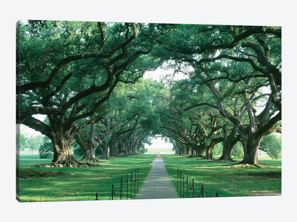 Brick Path Through Alley Of Oak Trees, Louisiana, New Orleans, USA by Panoramic Images 1-piece Canvas Art Print