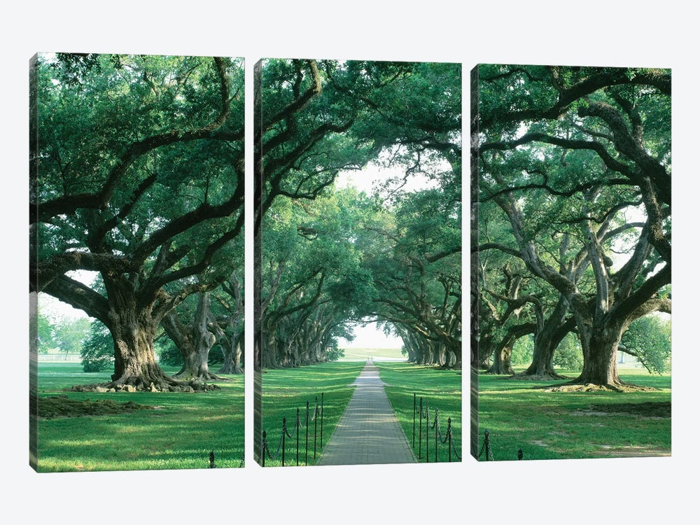 Brick Path Through Alley Of Oak Trees, Louisiana, New Orleans, USA by Panoramic Images 3-piece Art Print