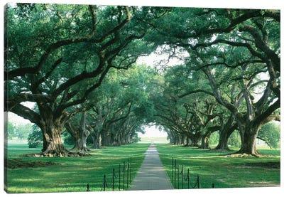 Brick Path Through Alley Of Oak Trees, Louisiana, New Orleans, USA Canvas Art Print