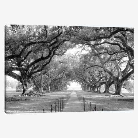 Brick Path Through Alley Of Oak Trees, Louisiana, New Orleans, USA (Black And White) I Canvas Print #PIM14308} by Panoramic Images Canvas Art