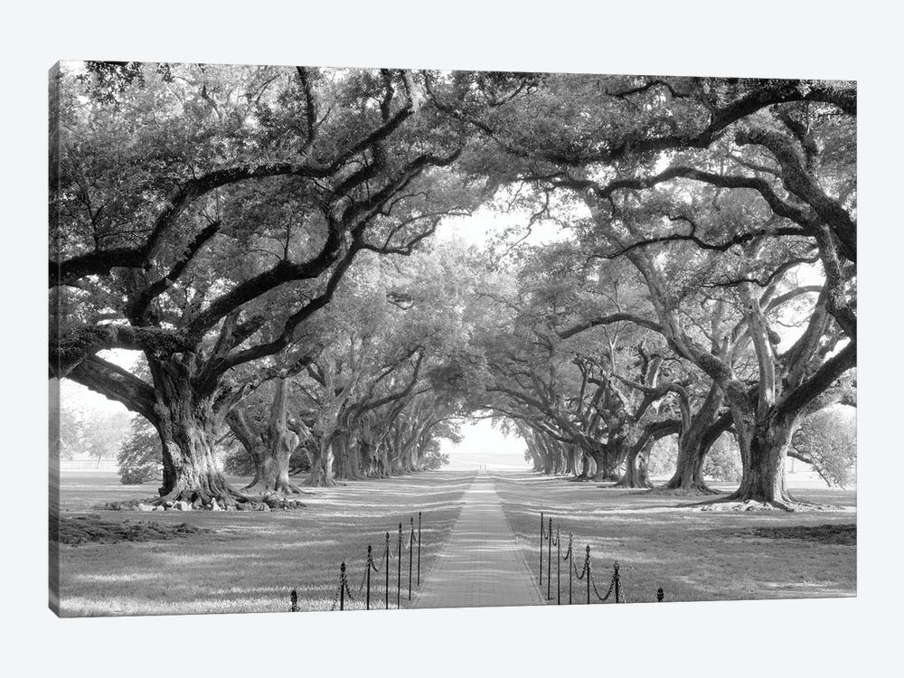 Brick Path Through Alley Of Oak Trees, Louisiana, New Orleans, USA (Black And White) I by Panoramic Images 1-piece Canvas Wall Art