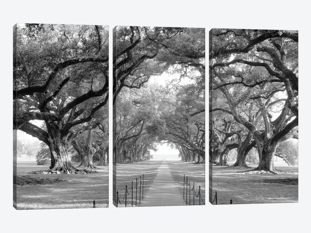 Brick Path Through Alley Of Oak Trees, Louisiana, New Orleans, USA (Black And White) I by Panoramic Images 3-piece Canvas Wall Art