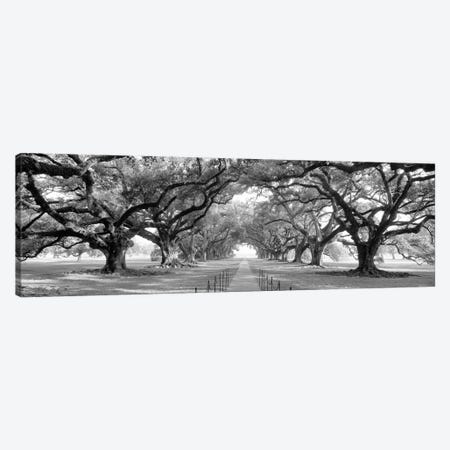 Brick Path Through Alley Of Oak Trees, Louisiana, New Orleans, USA (Black And White) II Canvas Print #PIM14309} by Panoramic Images Canvas Wall Art