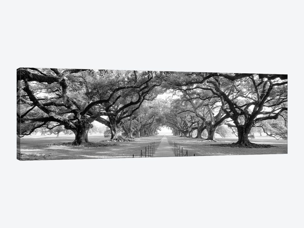 Brick Path Through Alley Of Oak Trees, Louisiana, New Orleans, USA (Black And White) II by Panoramic Images 1-piece Canvas Print