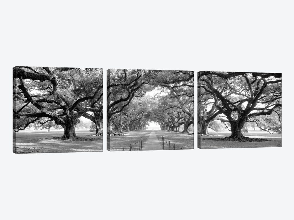 Brick Path Through Alley Of Oak Trees, Louisiana, New Orleans, USA (Black And White) II by Panoramic Images 3-piece Art Print