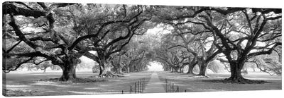 Brick Path Through Alley Of Oak Trees, Louisiana, New Orleans, USA (Black And White) II Canvas Art Print