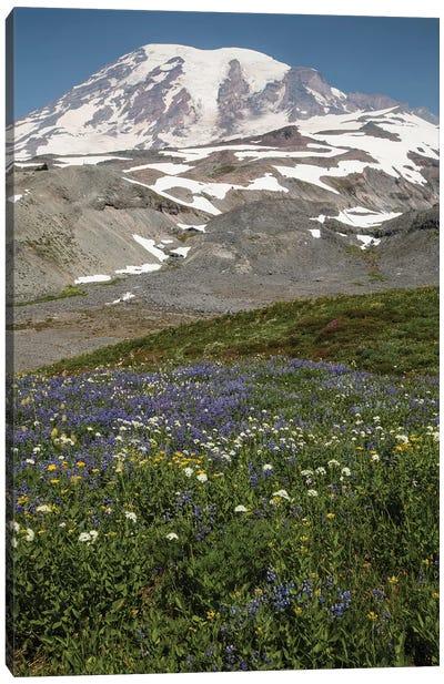 Broadleaf Lupine Flowers In A Field, Mount Rainier National Park, Washington State, USA Canvas Art Print