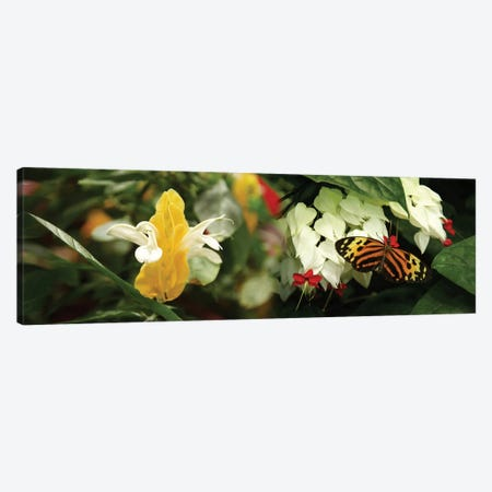 Butterflies Pollinating Flowers Canvas Print #PIM14325} by Panoramic Images Art Print