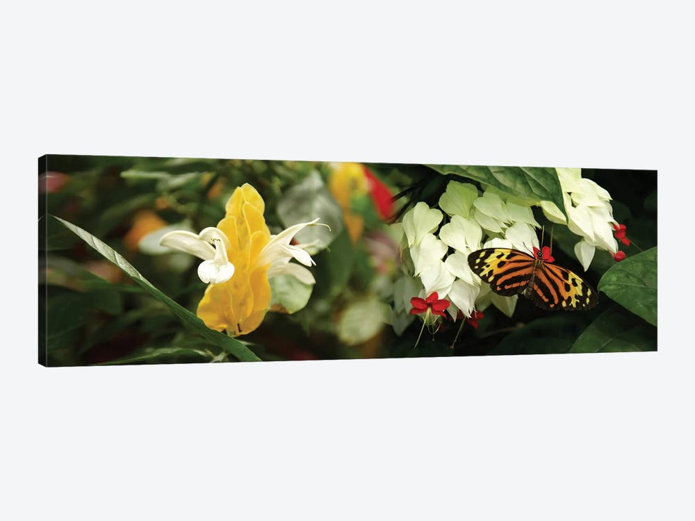 Butterflies Pollinating Flowers by Panoramic Images 1-piece Canvas Print