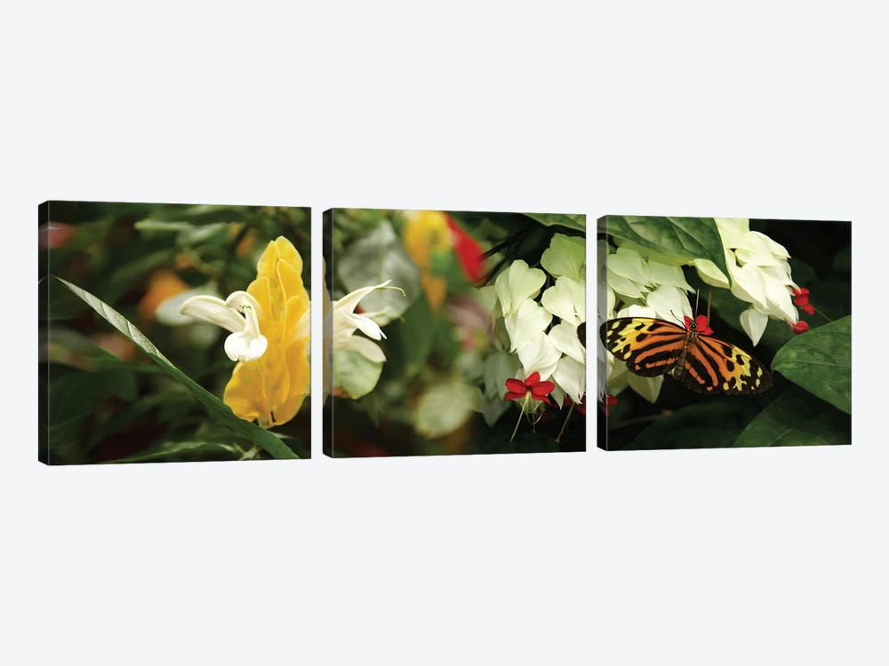 Butterflies Pollinating Flowers by Panoramic Images 3-piece Art Print