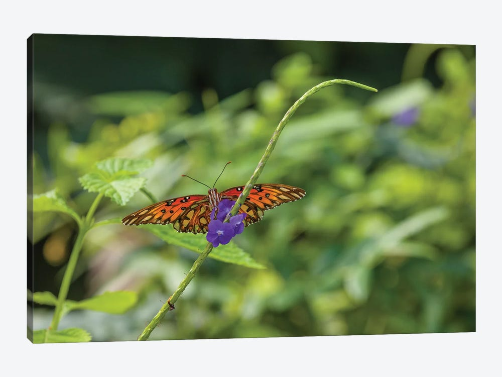 Butterfly Perched On Leaf, Florida, USA II by Panoramic Images 1-piece Canvas Art Print