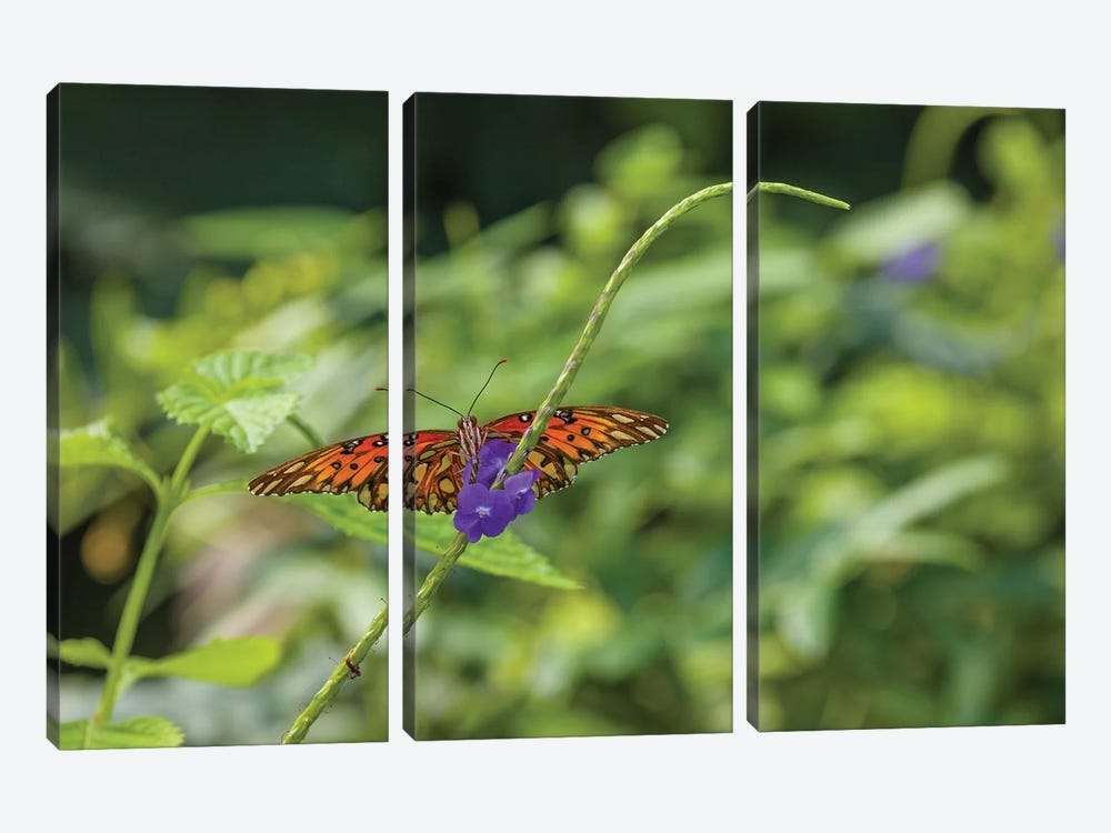 Butterfly Perched On Leaf, Florida, USA II by Panoramic Images 3-piece Canvas Print