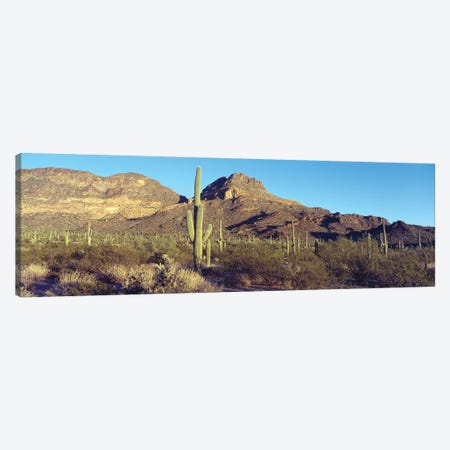 Cactus In A Desert, Organ Pipe Cactus National Park, Arizona, USA Canvas Print #PIM14328} by Panoramic Images Canvas Art