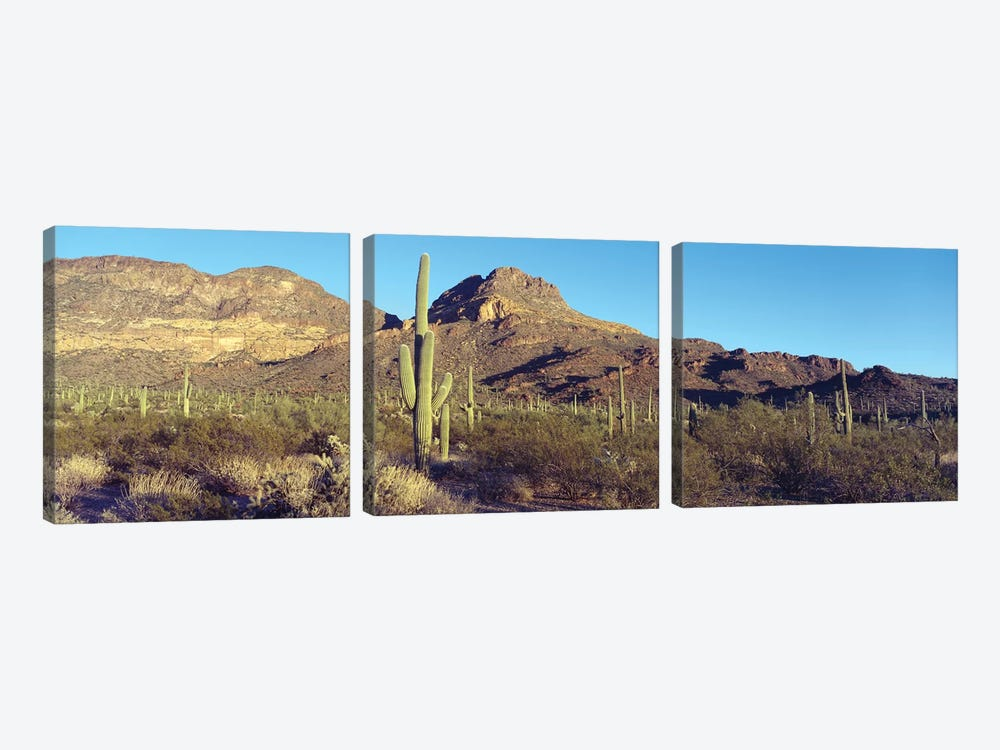 Cactus In A Desert, Organ Pipe Cactus National Park, Arizona, USA by Panoramic Images 3-piece Canvas Artwork