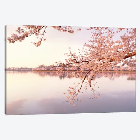 Cherry Blossoms At The Lakeside, Washington D.C., USA II Canvas Print #PIM14340} by Panoramic Images Canvas Art