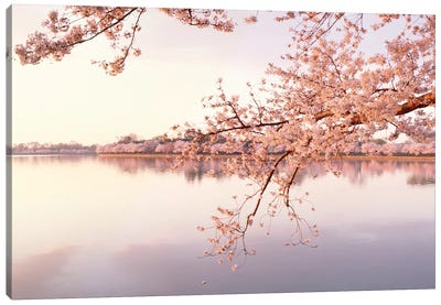 Cherry Blossoms At The Lakeside, Washington D.C., USA II Canvas Art Print