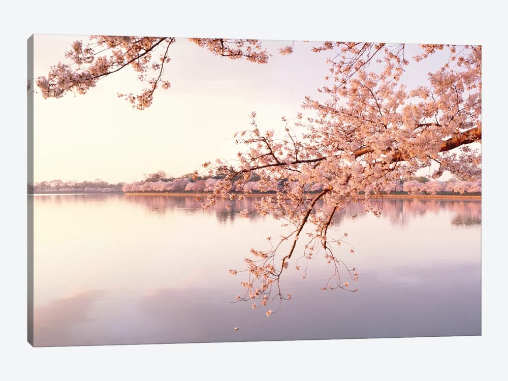 Cherry Blossoms At The Lakeside, Washington D.C., USA II by Panoramic Images 1-piece Canvas Wall Art