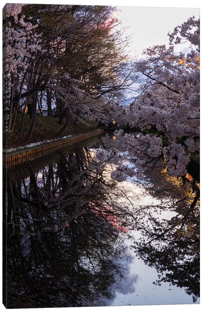 Cherry Blossoms Reflected In Outer Moat, Hirosaki Park, Hirosaki, Aomori Prefecture, Japan Canvas Art Print