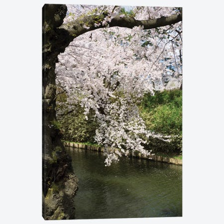 Cherry Trees And Blossoms Near Outer Moat Of Hirosaki Park, Hirosaki, Aomori Prefecture, Japan Canvas Print #PIM14343} by Panoramic Images Canvas Art
