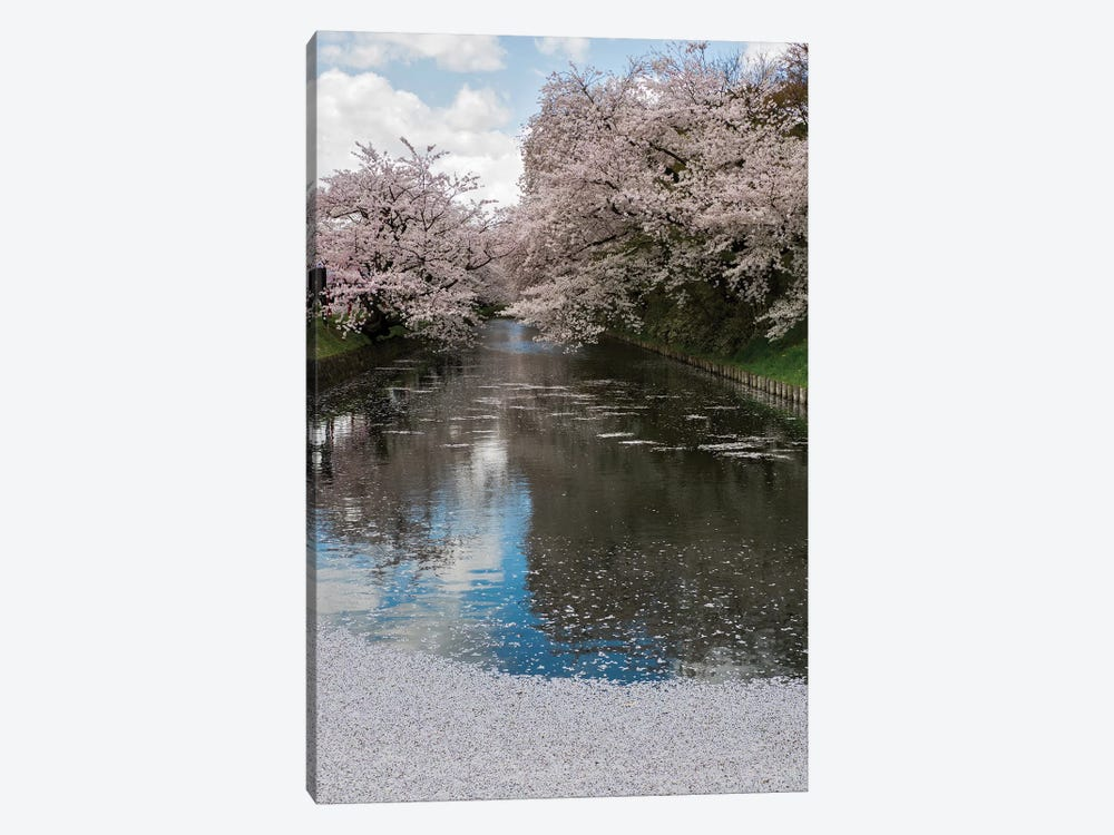 Cherry Trees And Blossoms Reflected In Outer Moat Of Hirosaki Park, Hirosaki, Aomori Prefecture, Japan by Panoramic Images 1-piece Canvas Artwork