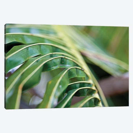 Close-Up Detail Of Plant, Culebra Island, Puerto Rico Canvas Print #PIM14354} by Panoramic Images Canvas Wall Art