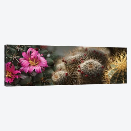 Close-Up Of Assorted Cactus Plants I Canvas Print #PIM14362} by Panoramic Images Canvas Wall Art
