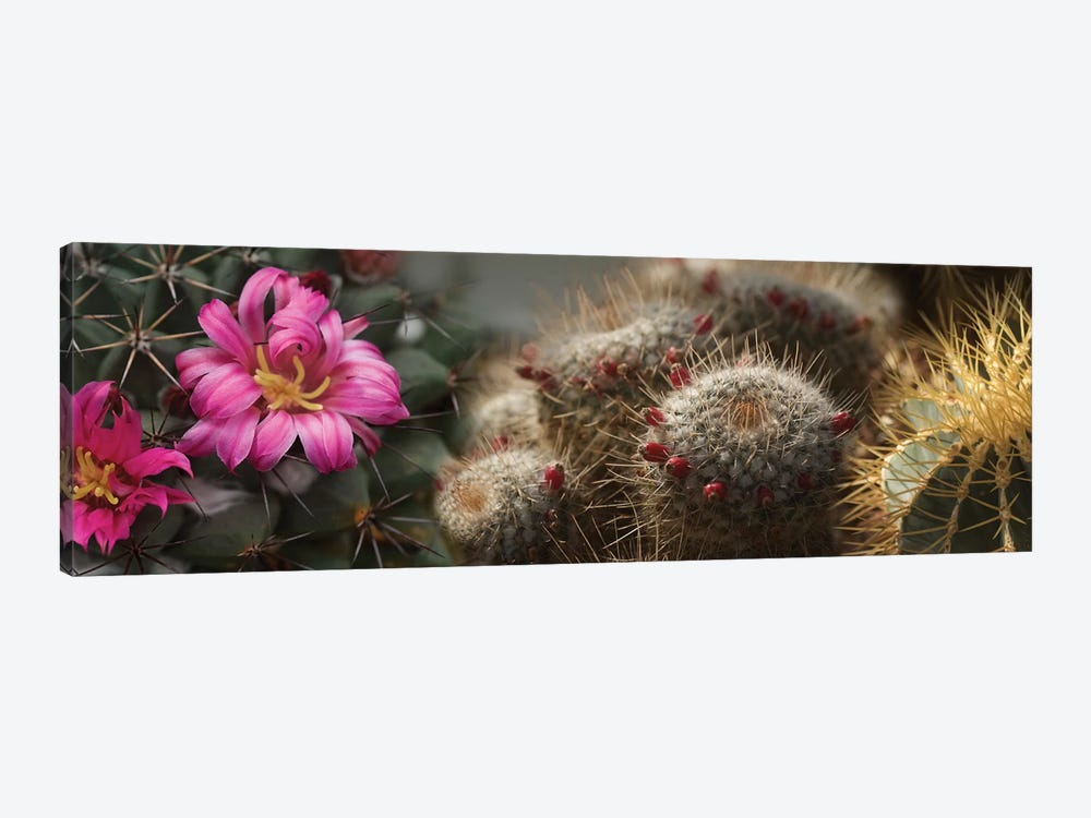 Close-Up Of Assorted Cactus Plants I 1-piece Canvas Art