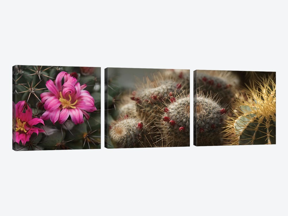 Close-Up Of Assorted Cactus Plants I by Panoramic Images 3-piece Canvas Wall Art