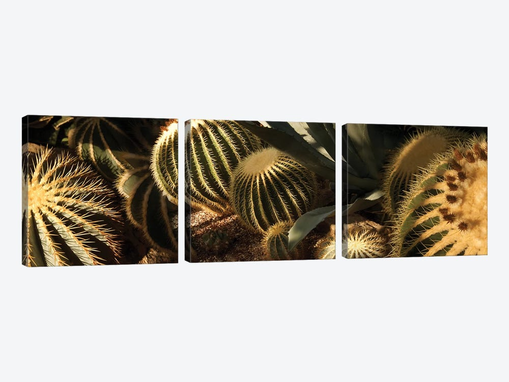 Close-Up Of Assorted Cactus Plants II by Panoramic Images 3-piece Canvas Print